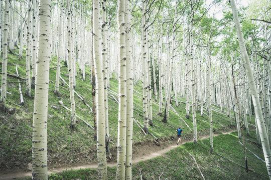 Rear view of man jogging in aspen tree forest