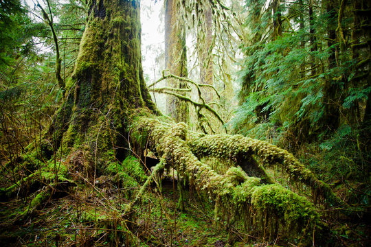 View of moss tree root in the forest