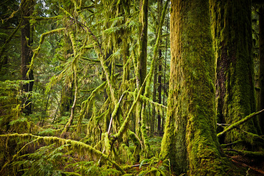 Lush moss covered forest.
