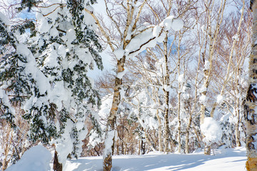 Beautiful view from snow covered moutain at Sapporo Kokusai, Japan.