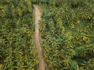 Aerial view of the road in palm grove at Sumbawa island, Indonesia