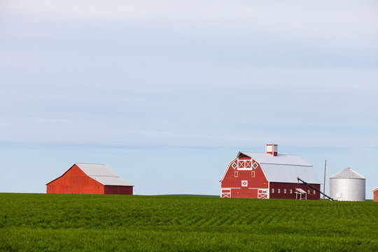 Farm with red barns and field, Palouse, Washington State, USA