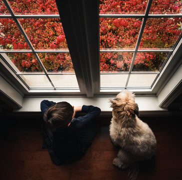 Young boy and dog on the floor looking out the window shot from above