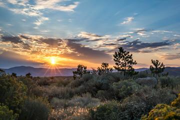 Desert at sunrise, Reno, Nevada, USA