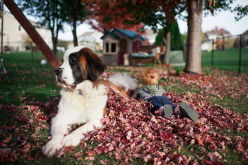 Large dog lays in leaf pile with toddler best friend in backyard