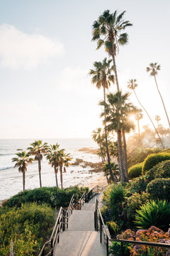 Staircase and palm trees at Heisler Park, in Laguna Beach, Orange County, California