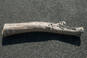 A tree branch with mushrooms