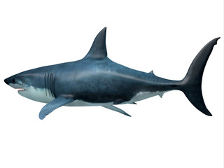 Megalodon Predator Shark Tail - Megalodon was an enormous carnivorous shark that roamed the oceans of the Pleistocene Period.