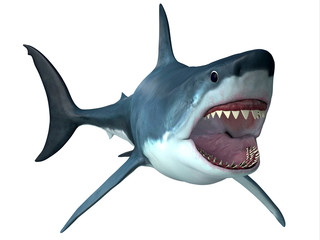 Megalodon Predator Shark - Megalodon was an enormous carnivorous shark that roamed the oceans of the Pleistocene Period.