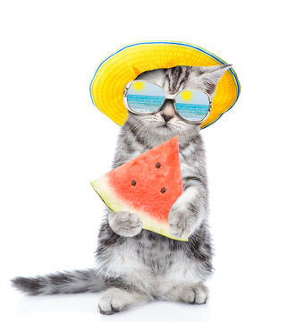 Tiny kitten with mirrored sunglasses and summer hat holds watermelon. isolated on white background
