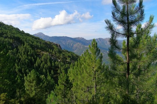 The mountains covered with coniferous trees, Corsica