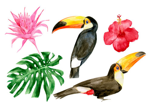 Watercolor portrait of toucans in the forest vector illustration. Exotic birds with tropical leaves with red flowers. Two wild keel-billed tucan with leaf. Nature travel in Costa Rica, wildlife.