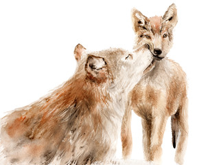 watercolor animals - red wolf with a kid