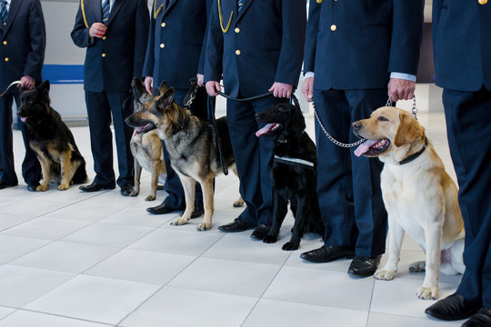 Dogs standing near the customs cops. Horizontal view.