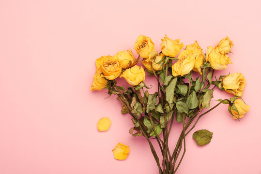 Dry yellow roses bouquet on pink pastel background with copy-space