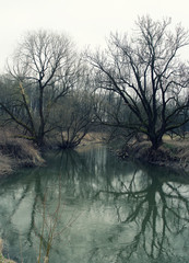 Branches of bare trees over the dark river