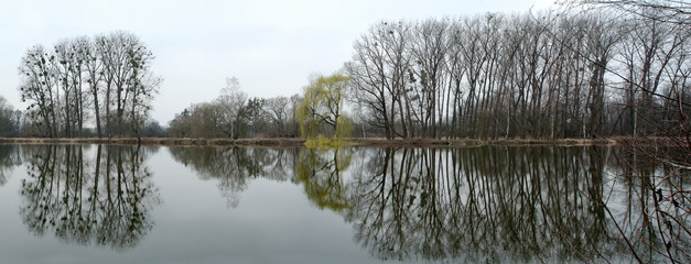 Panoramic view of group of trees and reflection in water surface