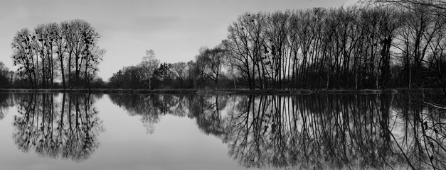 B&W Black and white Panoramic view of group of trees and reflection in water surface