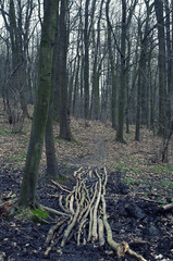 Dark forest and path from branches