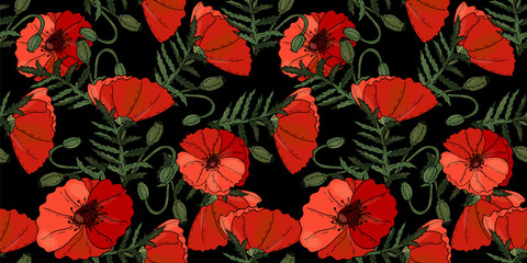 Poppy flowers floral seamless background isolated on the black