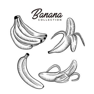 banana collection  hand drawn style