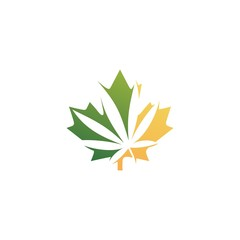 canadian cannabis logo vector icon illustration for hemp leaf dispensaries and company from canada