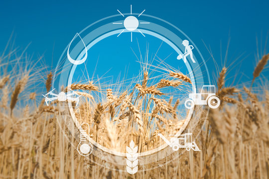 Digital sensor icons for management and monitoring agriculture