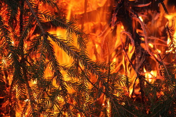 Beautiful fire, burning branches in the fire close-up - texture for background