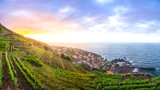 Wineyards of Madeira at sunset, above the municipality of Seixal