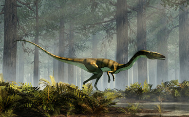 Coelophysis, one of the earliest dinosaurs, was a carnivorous theropod.  The creature stands in a forest of fir trees with a floor of ferns with rays of light shining down. 3D Rendering.  Wall mural