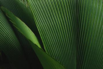 Leafy green plant Wall mural