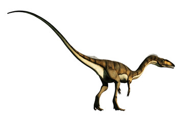 coelophysis, one of the earliest dinosaurs, was a carnivorous theropod.  Here is one turned away on a white background.  This one is brown with black stripes. 3D Rendering.  Wall mural