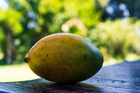 african mango on a table light shadow