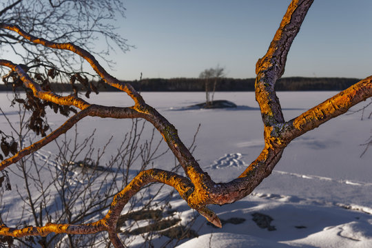 Golden branches on a background