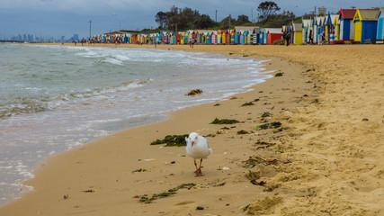 Brighton Melbourne beach houses