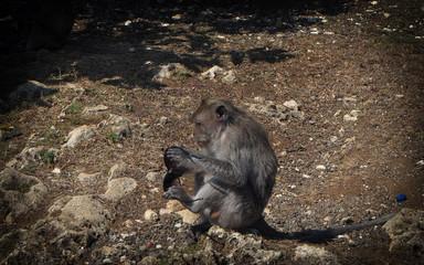 ape stolen sunglasses macaca