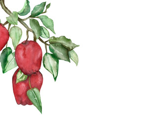 Watercolor hand painted composition branch with red apple friuts and green leaves, fresh summer illustration