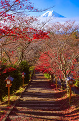 Fototapete - Path to Mt. Fuji in autumn, Fujiyoshida, Japan