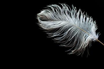 Foto op Plexiglas Struisvogel White ostrich feather on black background,Copy space