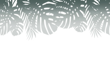 Wall Mural - Various tropical leaves shadow border, isolated on white background
