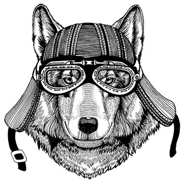 Wolf, dog wild biker animal wearing motorcycle helmet. Hand drawn image for tattoo, emblem, badge, logo, patch, t-shirt.