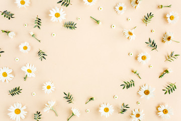 Wall Mural - Frame made of chamomiles, petals, leaves on beige background. Flat lay, top view floral background.