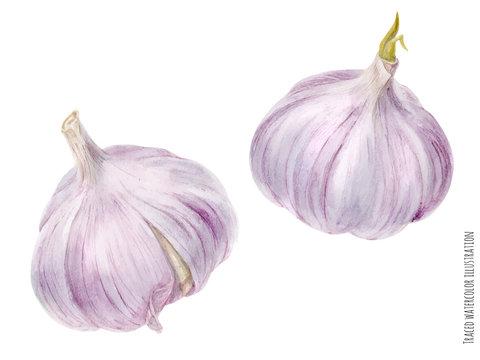 Pink garlic