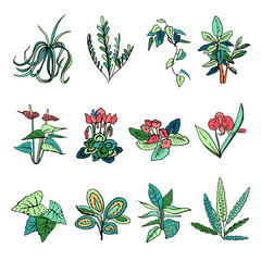 Houseplants set. Vector hand drawn color outline sketch illustration isolated on white background