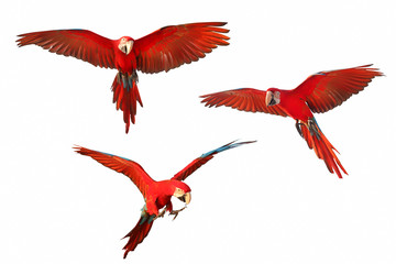 Fond de hotte en verre imprimé Perroquets Set of macaw parrot isolated on white background