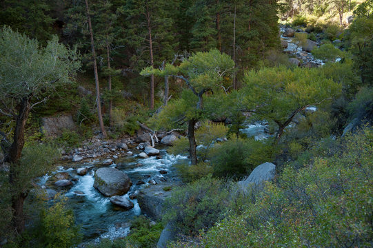 View of Tongue River passing through trees in forest