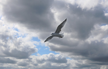 Gulls fly against the sky. There are many seagulls living on the sea.