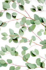 Wall Mural - green branches, leaves eucalyptus populus on white background. flat lay, top view