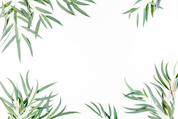 Wall Mural - frame of green branches, eucalyptus leaves nicoli on a white background. flat layout, top view