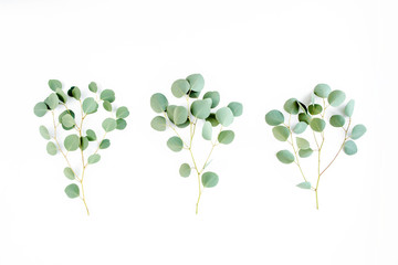 Wall Mural - green leaves eucalyptus on white background. flat lay, top view